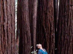 Auf diesem Bild sehen wir Eva in einer Yoga Haltung im Wald.