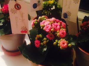 Auf diesem Bild sind Blumen im Yoga Studio in Stuttgart als Zeichen der Dankbarkeit.