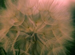 Auf diesem Bild sind Blumen, die an die neuroyalen Verbindungen im Gehirn erinnern.