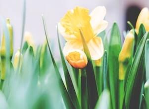 Auf diesem Bild sind Blumen für Yoga an den Feiertagen bei uns im Yoga Studio in Stuttgart West.