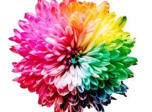 Viele Arten der Meditation wie es auch unterschiedliches Blumen gibt.